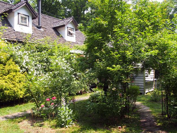 つるバラに占拠された我が家です。梅雨入りすると花が落ちるので、その後枝を裁定します
