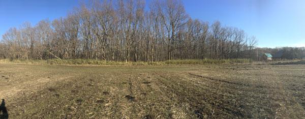 牧草地から土地を撮影。ナラと山ザクラの広葉樹林の200坪が売地